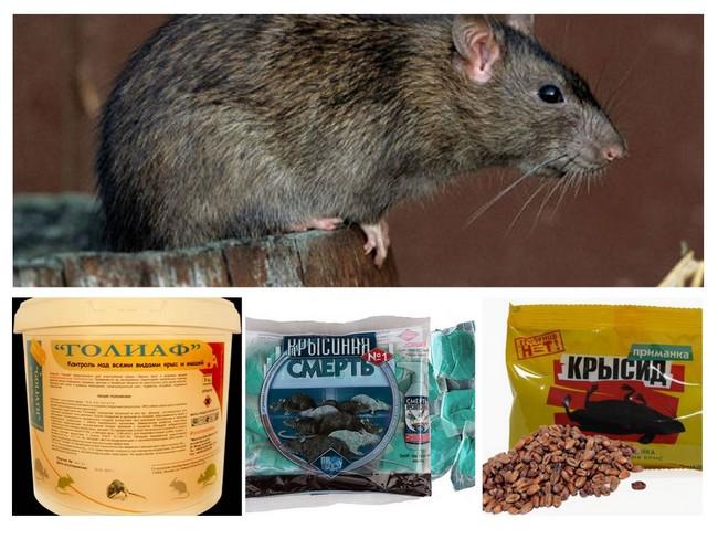 Эффективное средство от мышей в квартире