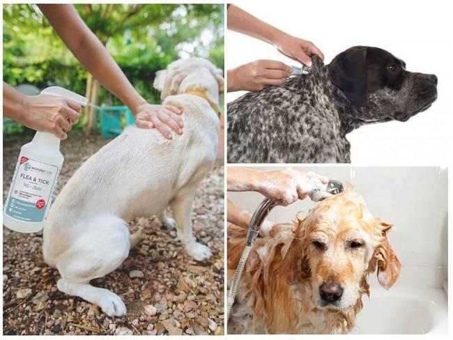 Как быстро избавиться от блох у собаки: Что делать и чем обработать 1