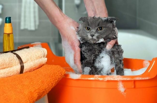 ТОП-12 лучших шампуней от блох для кошек и котят