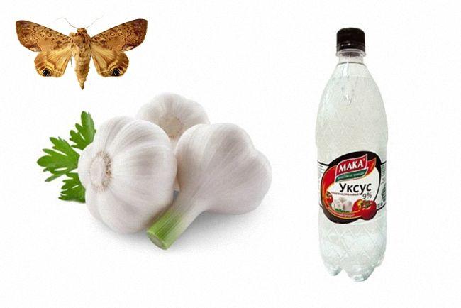 Какое растение своим запахом отпугивает моль