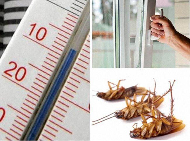Как вывести тараканов народными средствами