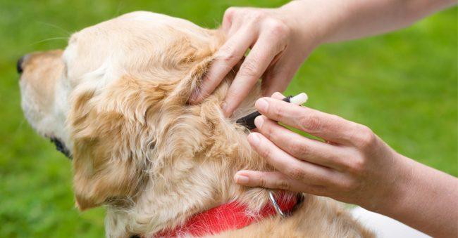 Блохи у щенка: как избавиться у щенков, средства и лечение 2