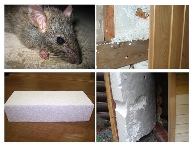 Какой утеплитель не грызут мыши и крысы: живут ли они в минвате и едят ли её