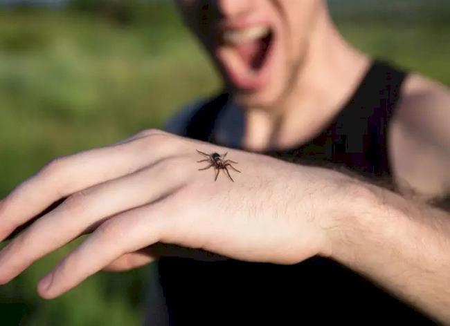 Укус большого белого паука