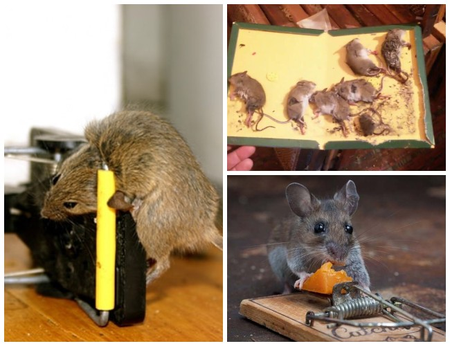 Как сделать так, чтобы не было мышей в деревянном доме