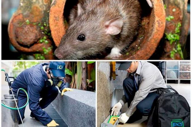 Способы устранения запаха мышей в доме