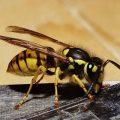 Оказание помощи при укусе осы